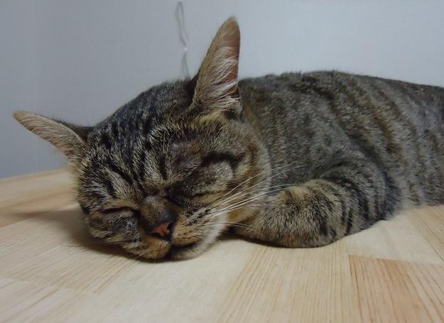 安眠する猫