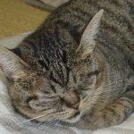毛呂山町の猫神社 排除ではなく猫と共存というのはどうだろ?