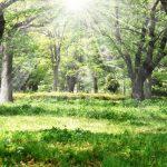 七草とは?日本の風習から春の七草と秋の七草の意味や由来