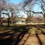小金井公園人も犬も楽しめる公園 ドッグランでわんちゃんと遊ぼう