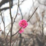 春分の日とは 二十四節気の中で春分の日が国民の祝日なのはなぜ?