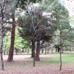 多摩地区の公園 府中の森を早朝散策 木々に囲まれてリフレッシュ!