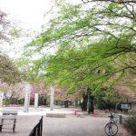多摩地区の公園 武蔵野公園早朝散策 緑に囲まれてほっと一息