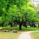 多摩地区の公園 花見の後の小金井公園散策 新緑豊かな公園をぶらり散歩