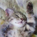 睡眠と夢の関係とは?起きた時疲れているのは睡眠の質と時間のせい?
